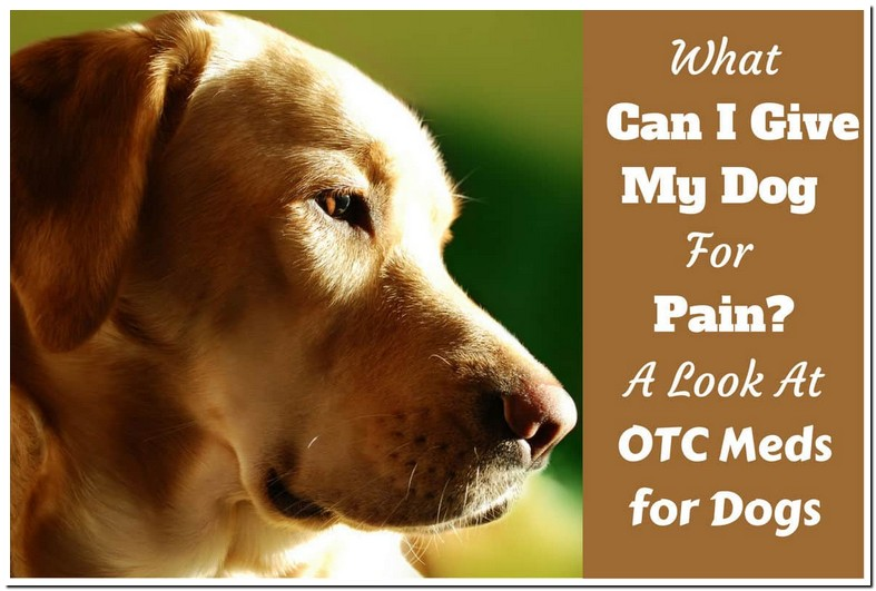 Acetaminophen Dosage For Dogs Pain