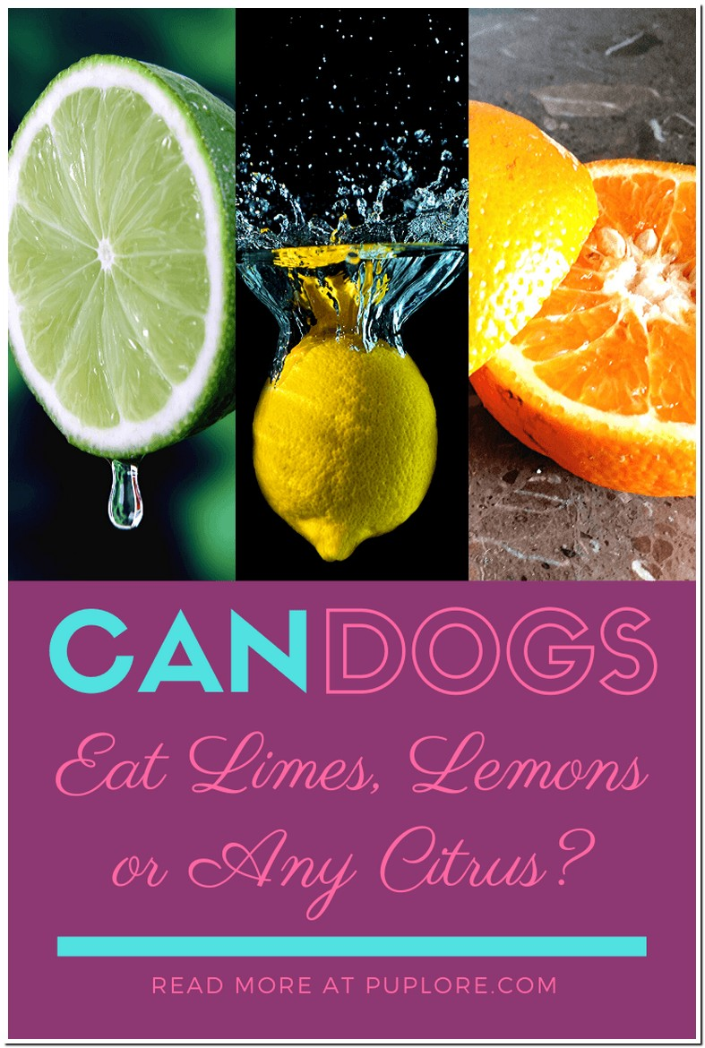 Are Lemons And Limes Bad For Dogs