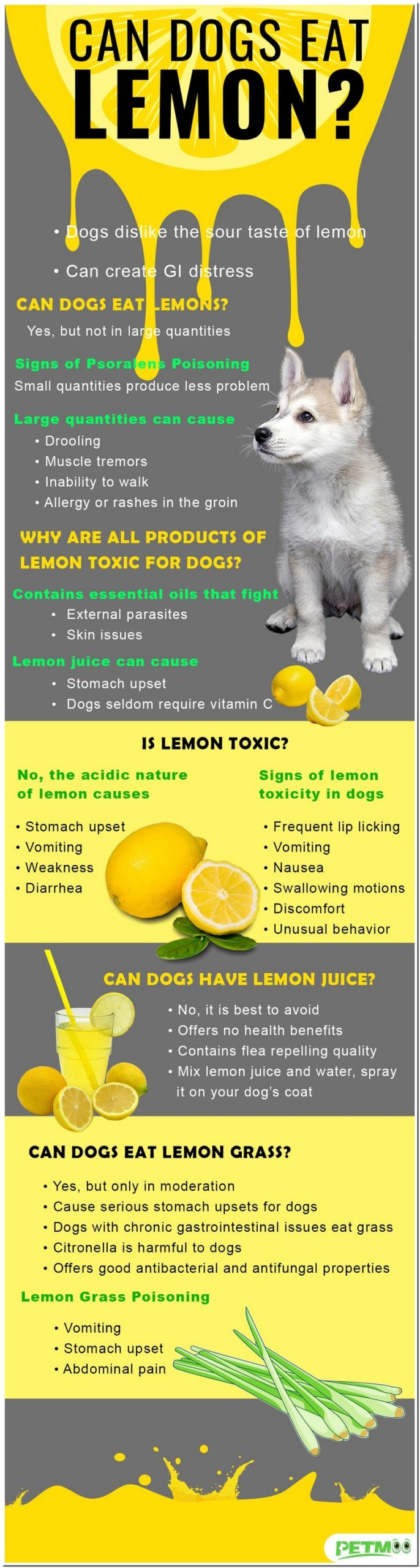 Are Lemons Safe For Dogs To Eat