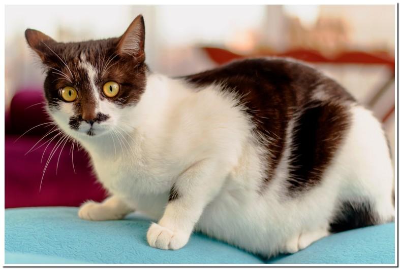 Average Cat Weight Male Orange Tabby