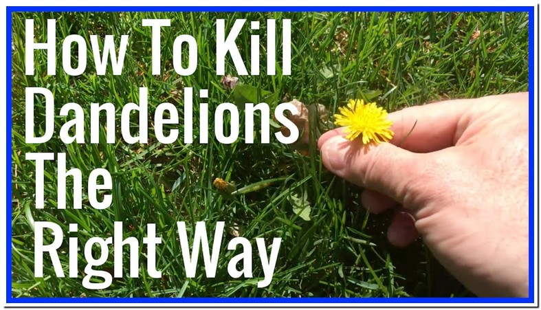 Best Way To Get Rid Of Dandelions In Your Lawn