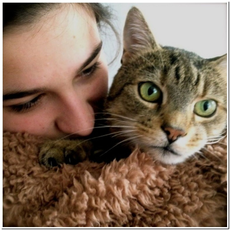 Budesonide For Cats Uk