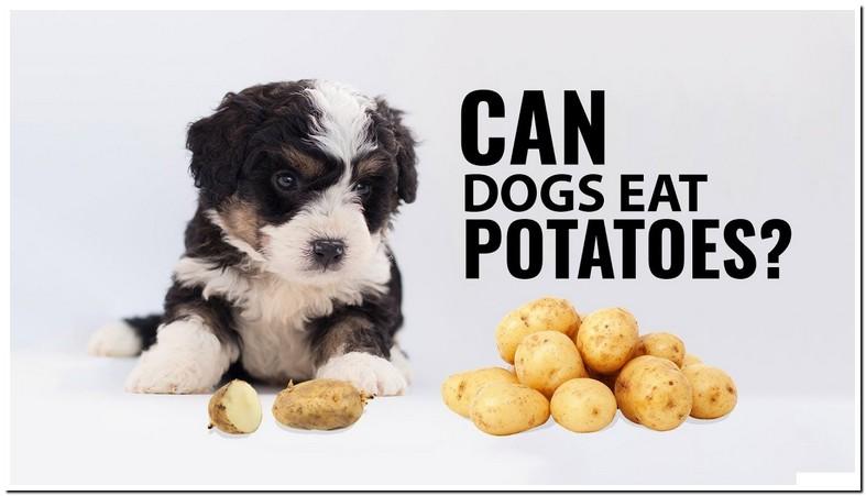 Can Dog Eat Potato