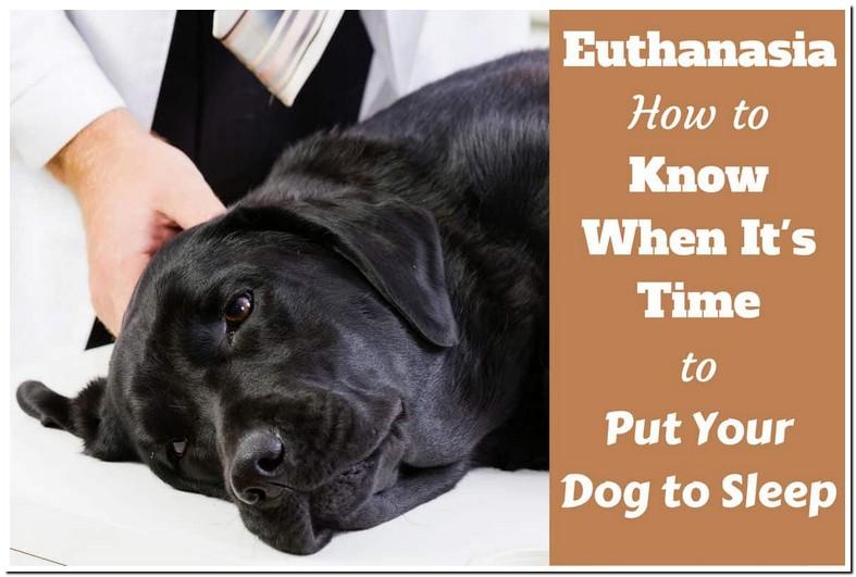 Can I Euthanize My Dog Myself