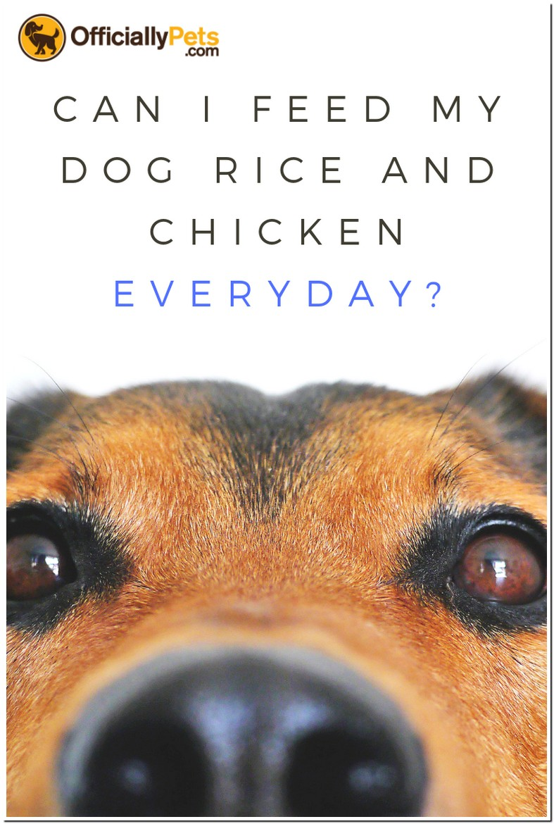 Can I Feed My Dog Rice And Chicken Everyday