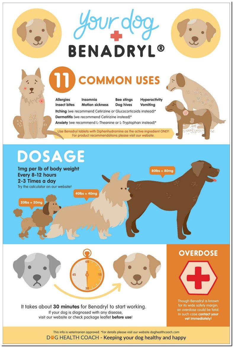 Can I Give Benadryl And Zyrtec To My Dog