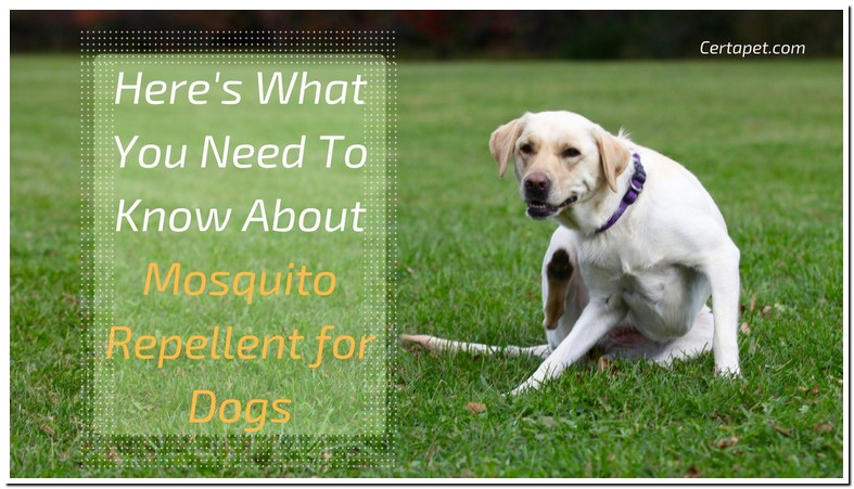 Can You Use Off Bug Spray On Dogs