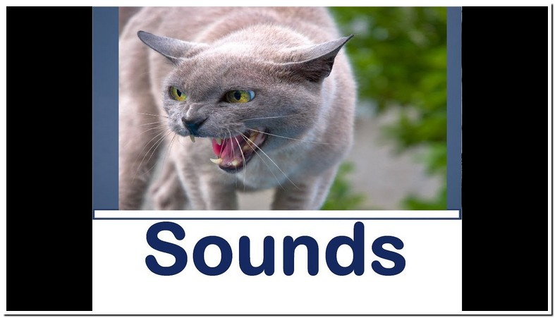 Cat Growling Sound Effect