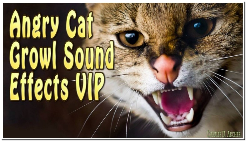 Cat Growling Sound