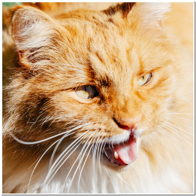 Cat Having Difficulty Breathing