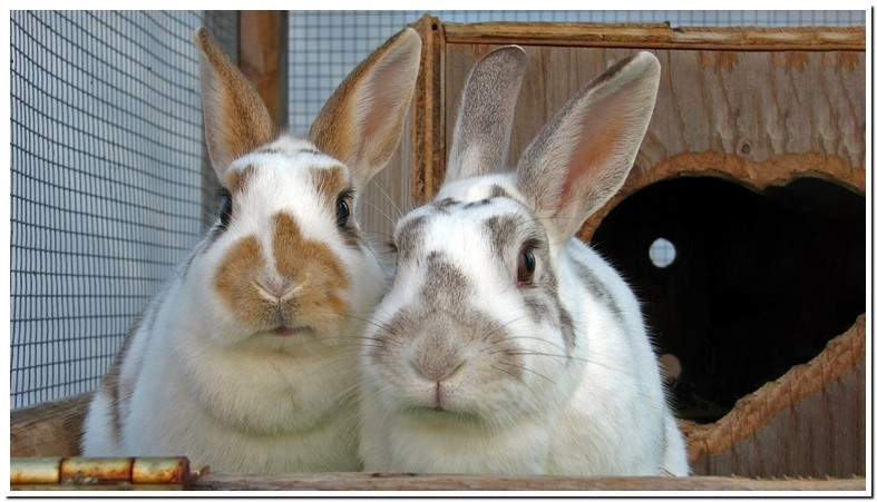 Does Bunnies Have Fleas