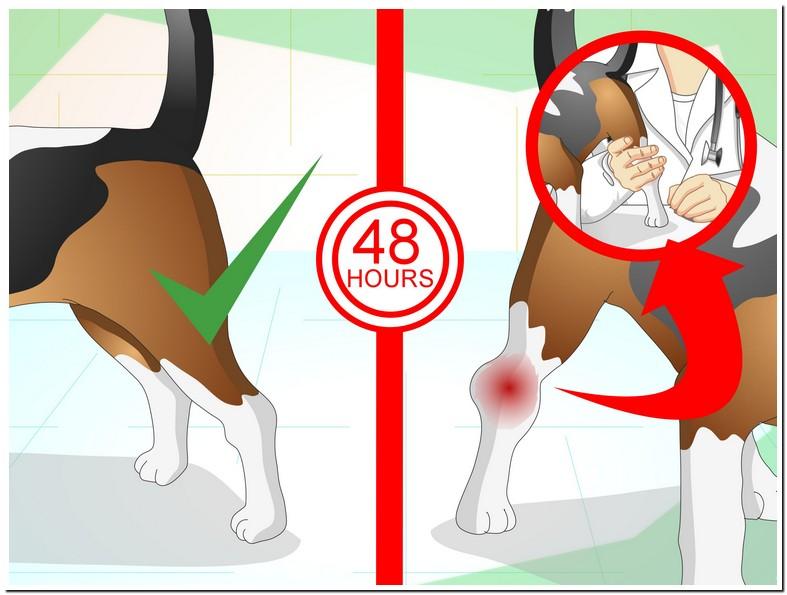 Dog Sprained Leg Healing Time