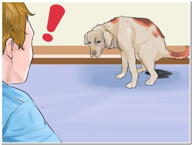 Dog Whelping Temperature Celsius