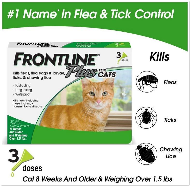 Flea Medicine For 4 Week Old Kittens