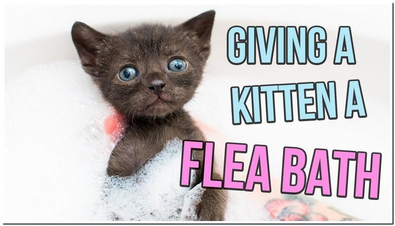 Flea Treatment For Kittens 4 Weeks Old