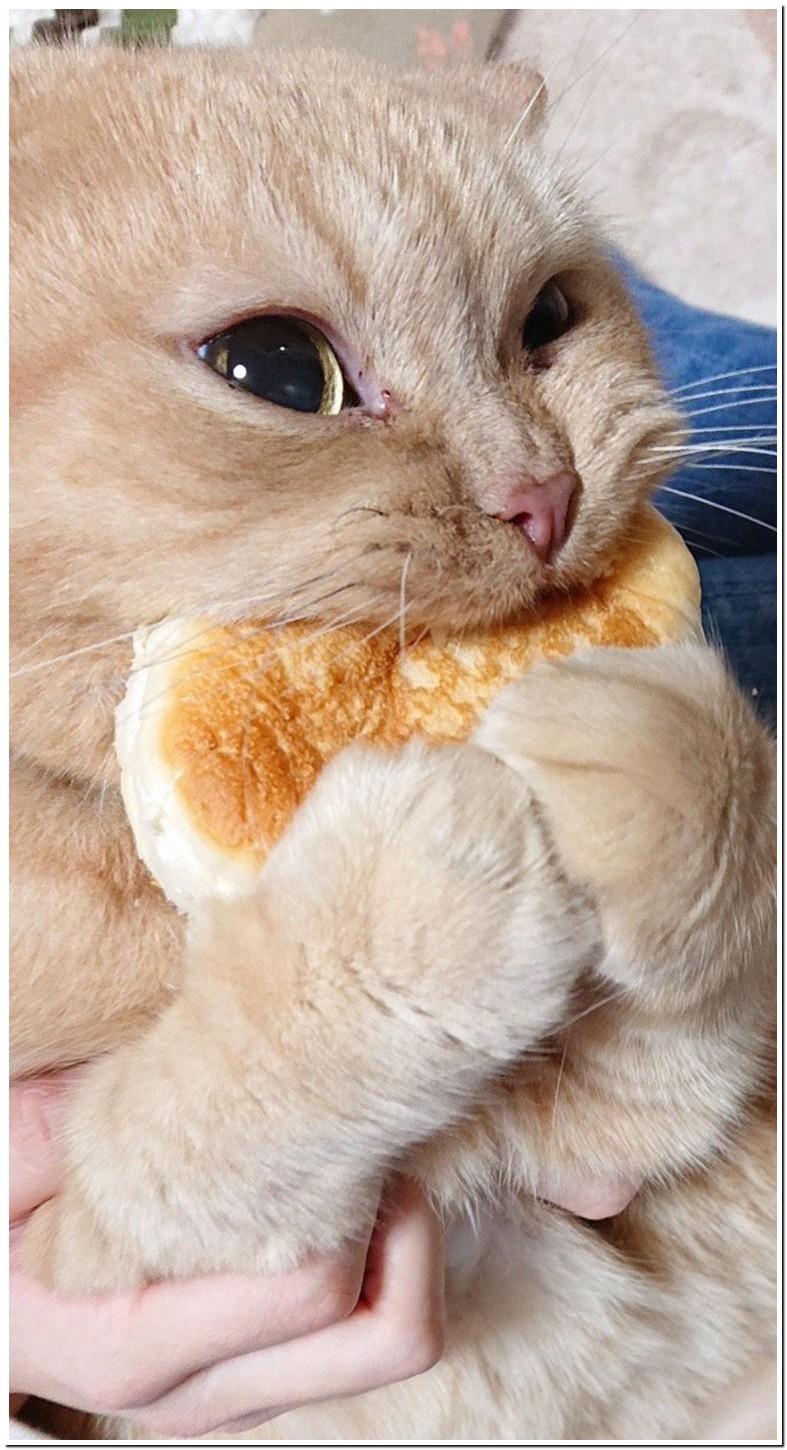 Is Bread Okay For Cats To Eat