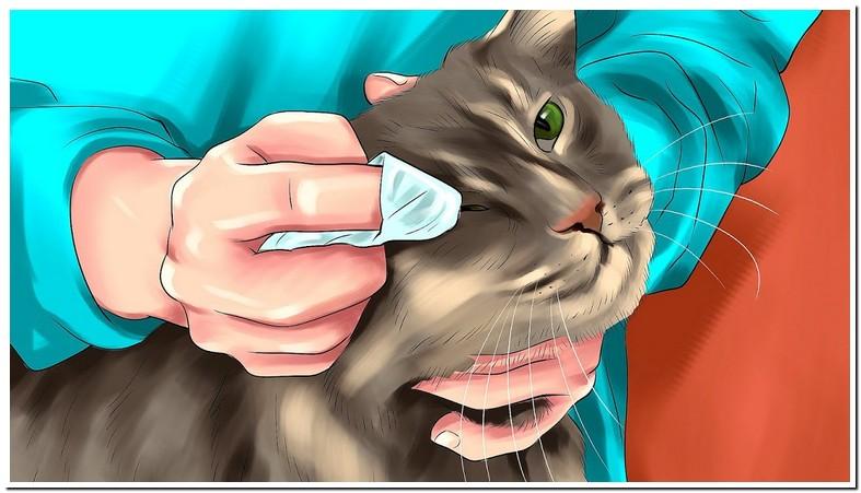 Megestrol Acetate Cats Uk