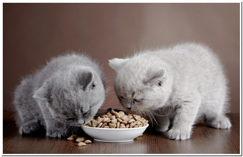 My Cat Wont Eat Dry Food