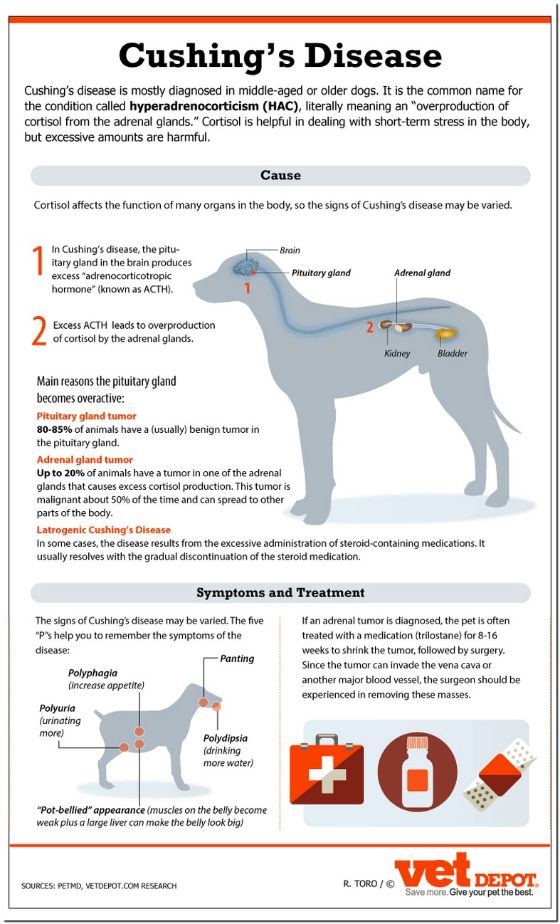Overactive Bladder Syndrome In Dogs