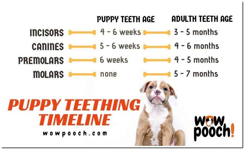 Puppy Loose Teeth Bad Breath