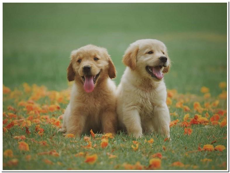 Puppy Rawhide Age