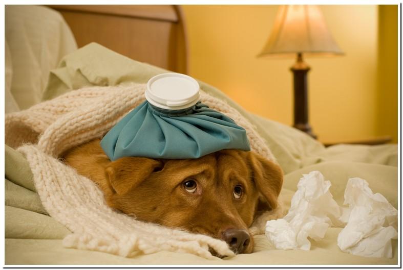 Senior Dog Congested Breathing