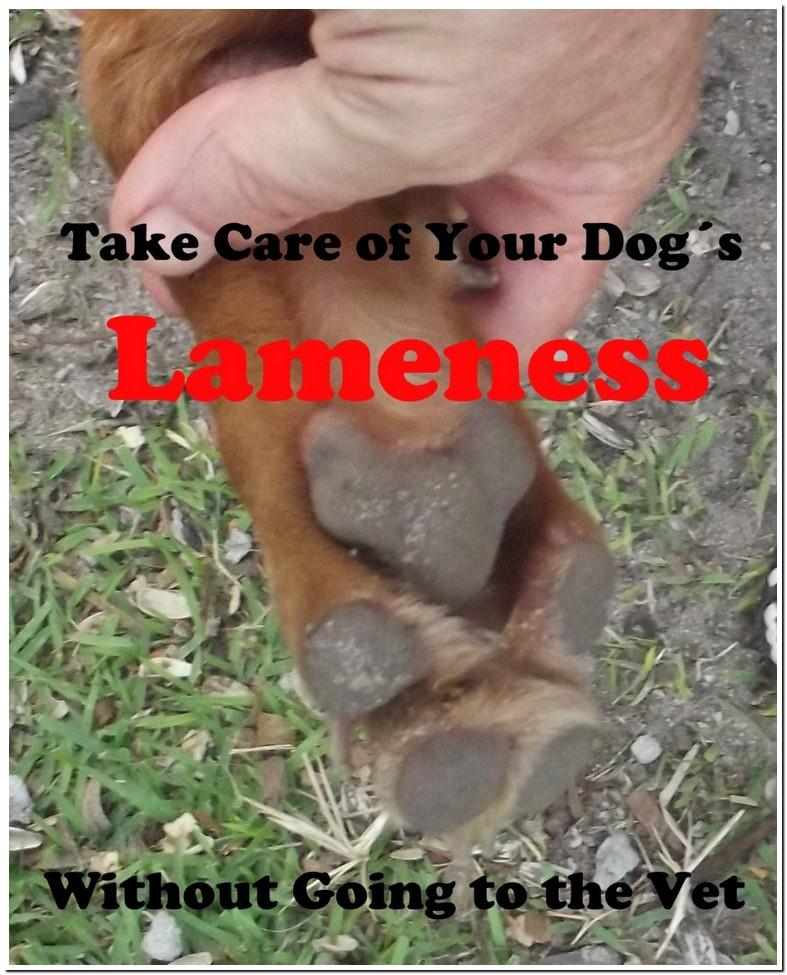 Small Dog Limping Back Leg No Pain