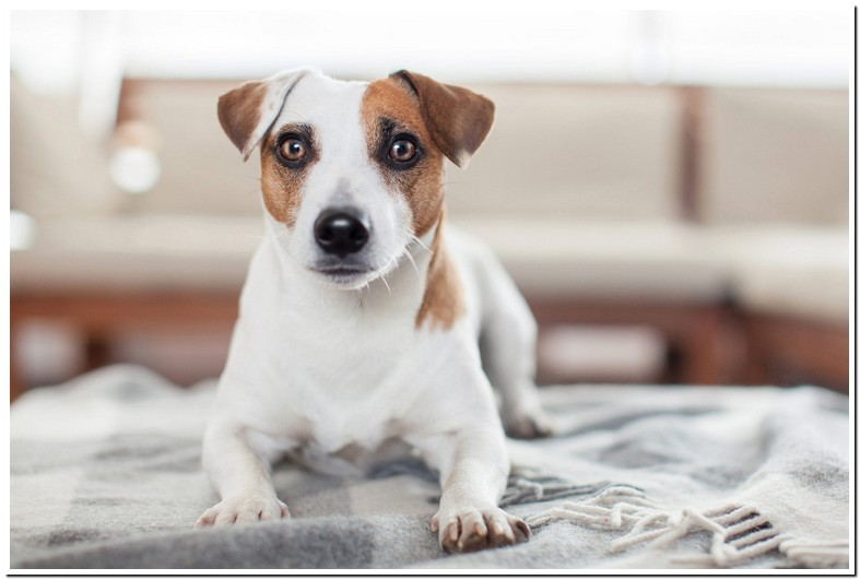 Treatment For Overactive Bladder In Dogs