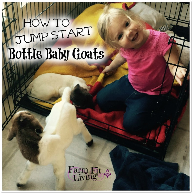 Tricks To Get A Baby Goat To Take A Bottle
