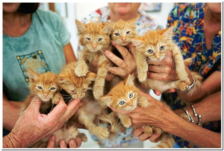 Tylenol Cat Euthanasia