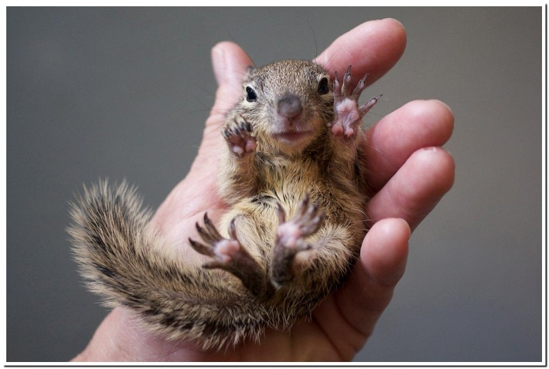 What Can I Feed A Baby Squirrel With Eyes Open