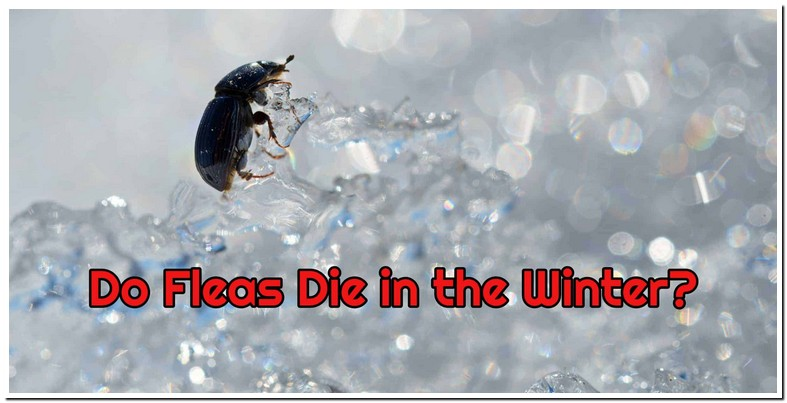 What Temperature Do Fleas Die Outside