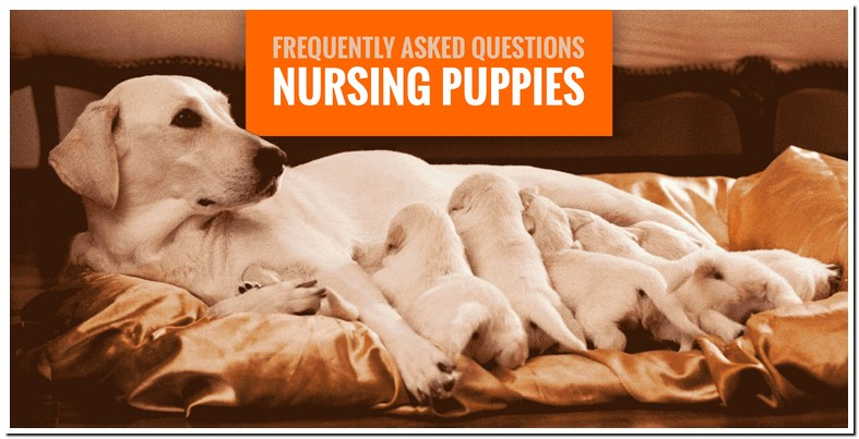 What To Feed A Dog Nursing Puppies