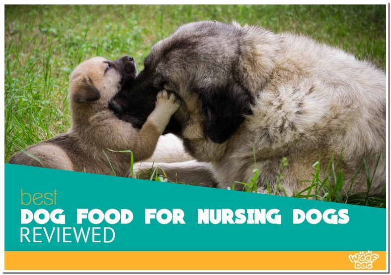 What To Feed A Nursing Mom Dog