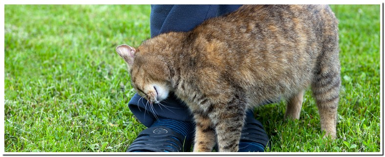 Why Cats Rub Up Against Your Legs