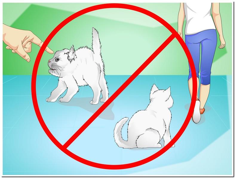 Why Won My Kitten Stop Meowing