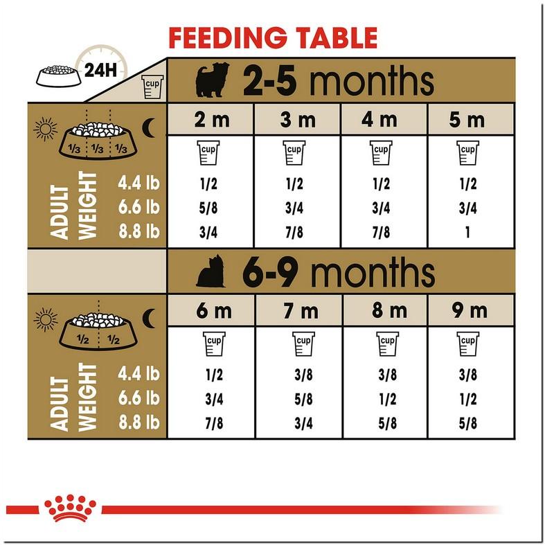 Yorkie Puppy Feeding Guide